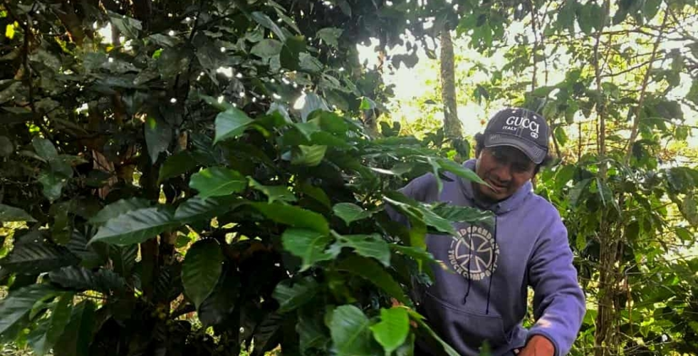 "Coffee and Climate: ""Little Soldiers"" Fighting the Food Fight"